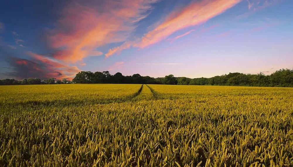 10 Punkte Papier für ein realistisches Landesartenschutzgesetz