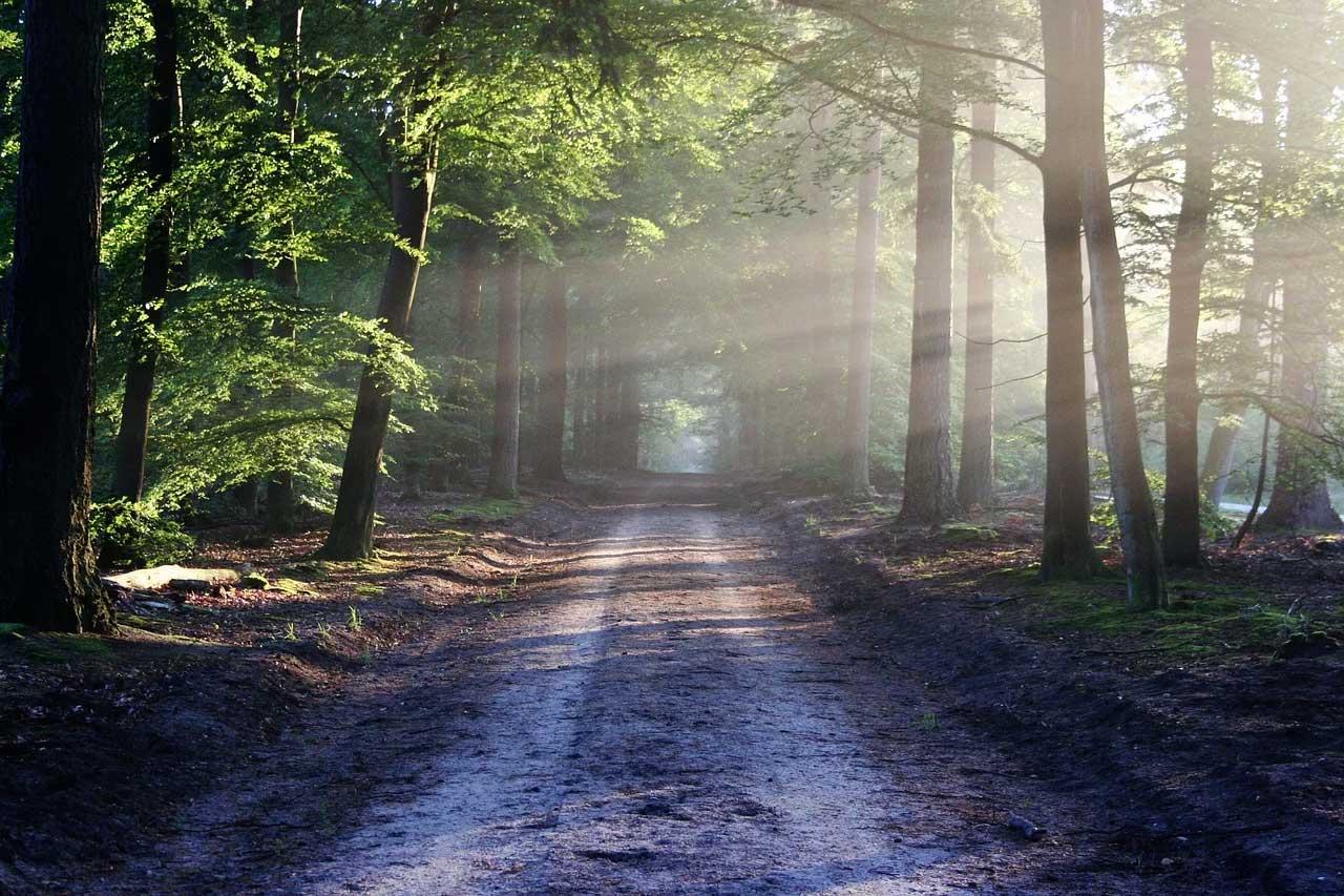 Natur-, Klima- und Umweltschutz geht uns alle an und ist gemeinsame Aufgabe aller.